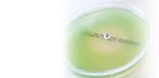Antibiotic discs, chloramphenicol, 30ug