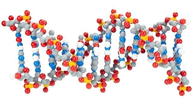 DNA Models & Simulations