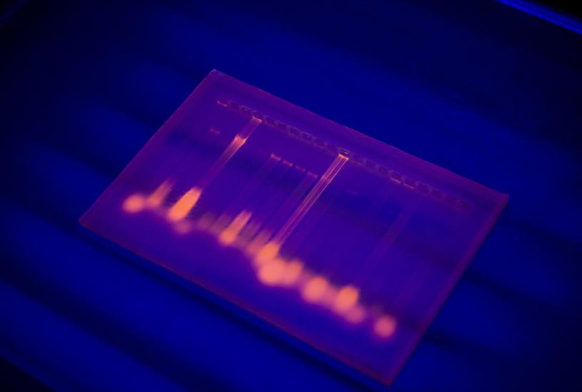bio-dc-bt-1-img1h.jpg
