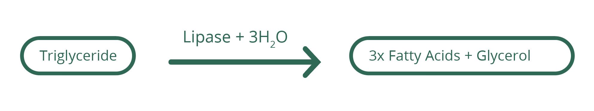 bio-p-cel-y11-12-3-1s.png