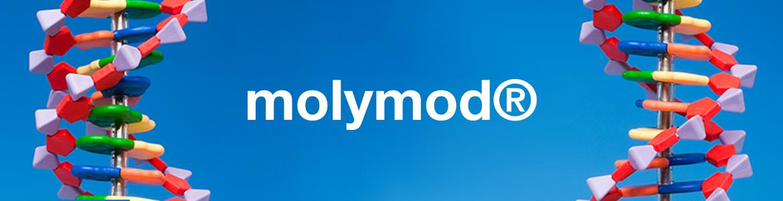 molymodbanner-1.jpg