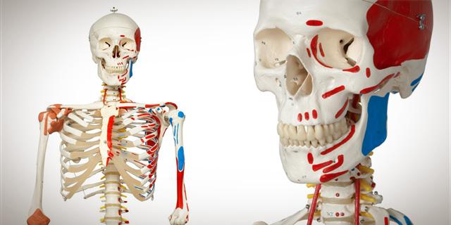 skeletons-banner.jpg