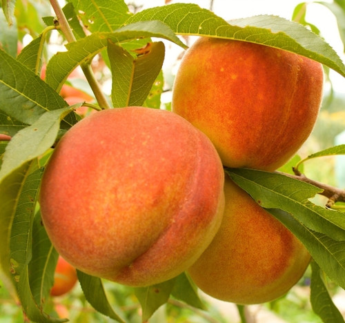 Peach 30ML E-liquid