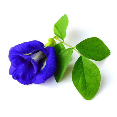 Blue Butterfly Pea Flower - bulk