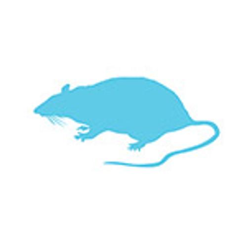 Weaner Rat (25 - 50 grams)