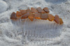 Amber Brown Sea Glass Hair Combs