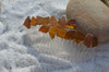 Amber Brown Sea Glass Combs