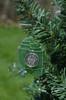 Clover Sea Glass Ornament