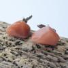 Tumbled Peach Quartz Stone Cufflinks