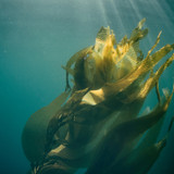 Getting Started With Seaweed: The Oceans' Superfood