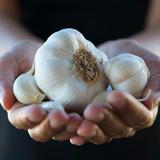Gotta Have Some Garlic