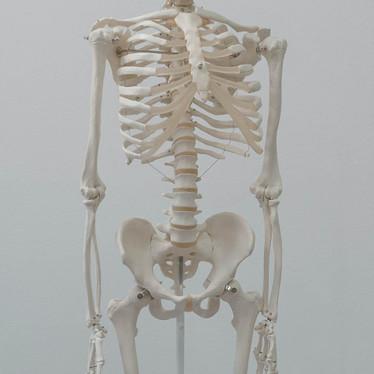 Dem Bones Dem Bones Dem Dry Bones…