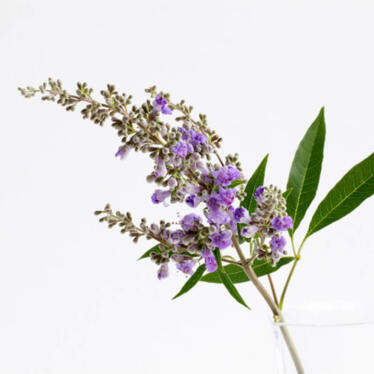 What Women Need To Know About The Vitex Agnus-Castus Fruit