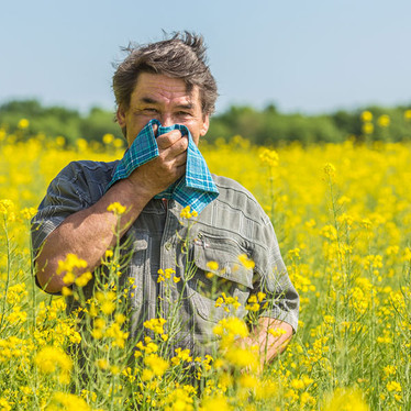 What's the deal with Allergies and Hay fever?