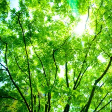 Should you supplement with chlorophyll?