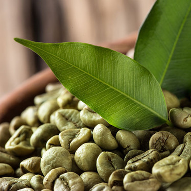 Pure Green Coffee Bean Extract for Weight Management