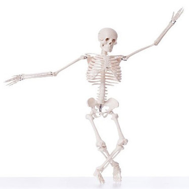 How to build a good skeleton – and keep it that way!