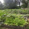 gardens-for-airbnb120x120.jpg