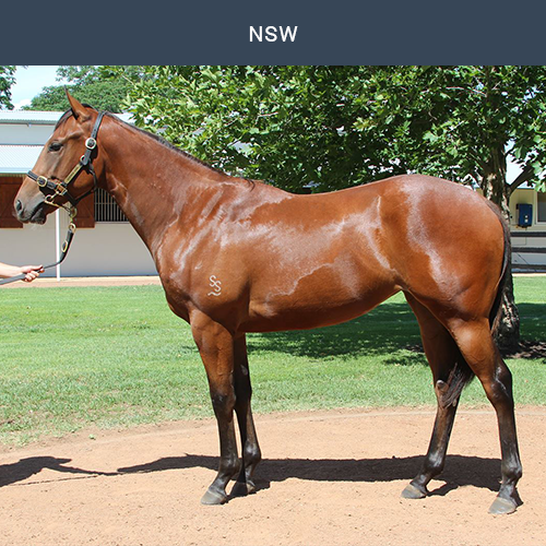 Hinchinbrook X Koonoomoo - Trained by Gai Waterhouse & Adrian Bott