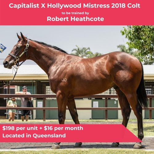 Capitalist X Hollywood Mistress - Trained by Robert Heathcote