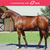 Lot 4 Inglis Easter Yearling Sale Exceed and Excel X Fate Rules