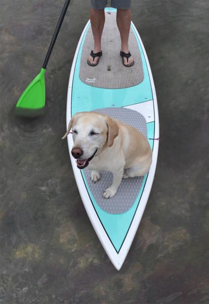 SUP Dog Board Pad