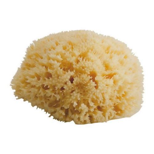 Bellini Sea Sponge Honeycomb - Medium