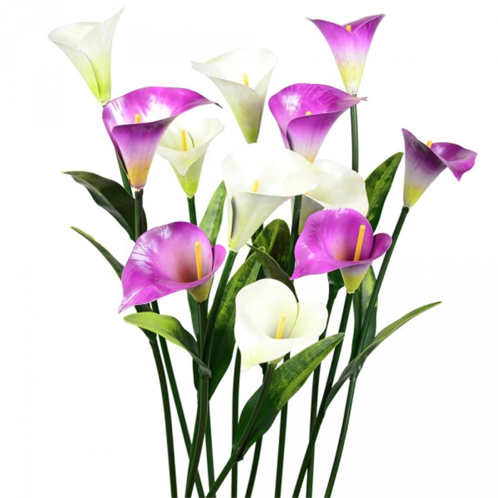 6 white & 6 purple per order