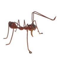 Bull Ant (LARGE)    - BHB161183
