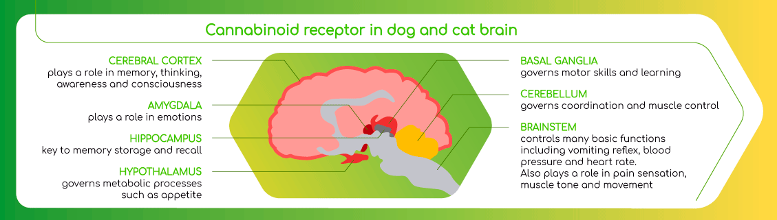 howcbdworks-neopets-brain.png