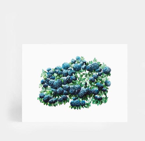OCEAN HYDRANGEAS  Printed Artwork