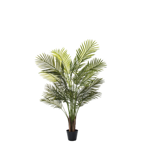 Areca Palm Plant - 2 sizes
