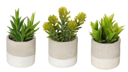Artificial  Succulents Pot - Set of 3