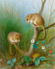 Art Prints of Dormice by Archibald Thorburn