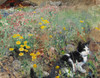 Art Prints of Cat on a Flowerbed by Bruno Liljefors