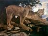 Art Prints of Canadian Lynx by Carl Rungius
