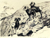 Art Prints of Cliff Dwellers by Carl Rungius