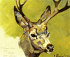 Art Prints of Deer Head by Carl Rungius