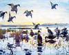 Art Prints of Ducks alighting on a Marsh by Frank Weston Benson