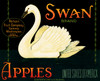 077 Swan Apples, Fruit Crate Labels | Fine Art Print