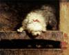 Peek-a-Boo by Henriette Ronner Knip | Fine Art Print