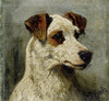 Art Prints of Study of a Hunt Terrier by John Emms
