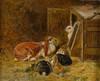 Art Prints of Study of Rabbits by John Frederick Herring
