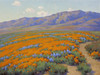 Art Prints of California Wildflowers by John Marshall Gamble