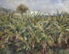 Art Prints of Field of Banana Trees by Pierre-Auguste Renoir