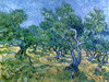 Art Prints of Olive Orchard, 1889 by Vincent Van Gogh