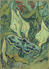 Art Prints of Emperor Moth by Vincent Van Gogh