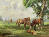 Art Prints of Horses at Huthwaite by Wright Barker