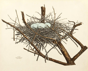Art Prints of Green Heron Nest, Plate XXVII, American Bird Nests