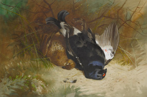 Art Prints of Still Life of a Pair of Blackgame by Archibald Thorburn